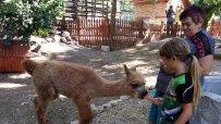 откриха-контактна-зона-в-зоопарка-във-варна-49045.jpg