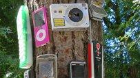 варненски-клошар-превърна-сухо-дърво-в-странна-арт-инсталация-49913.jpg