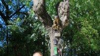 варненски-клошар-превърна-сухо-дърво-в-странна-арт-инсталация-49914.jpg