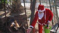 дядо-коледа-раздаде-подаръци-на-животните-във-варненския-зоопарк-52375.jpg