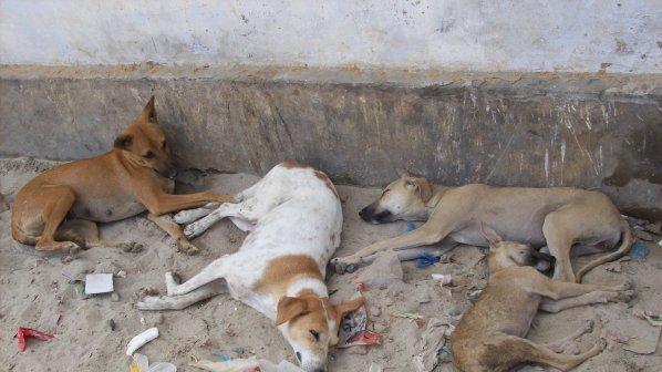 Улични кучета нахапаха абитуриент
