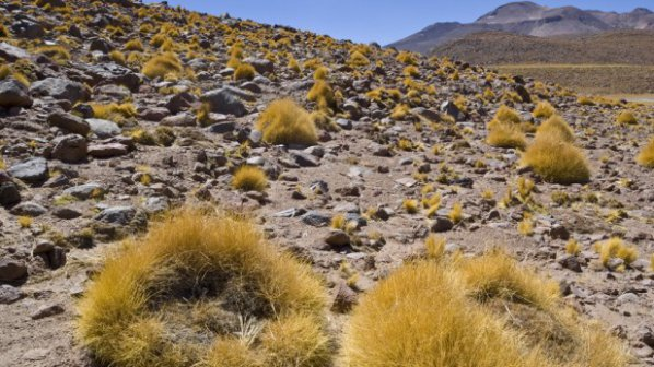 "Откриха ""оазис на микроорганизми"" в чилийската пустиня"