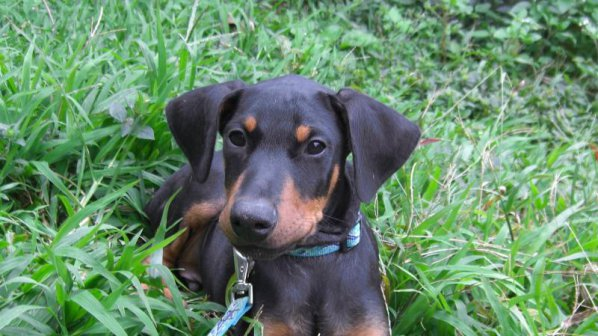 На Хаваите забраниха силния кучешки лай