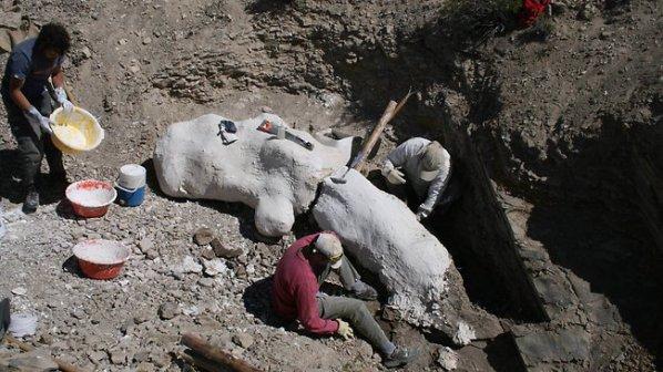 Нов вид динозавър в Патагония
