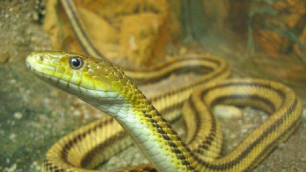 Змия ухапа малчуган в двора на училище