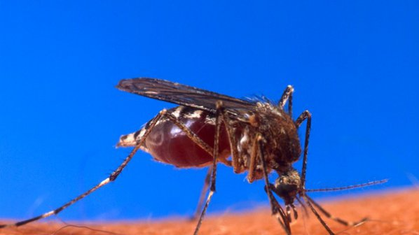 Създадоха комари, непренасящи малария