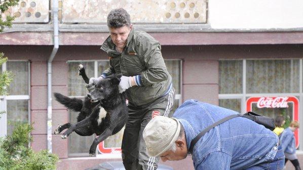 Заловиха два от помиярите, нахапали възрастния мъж в София