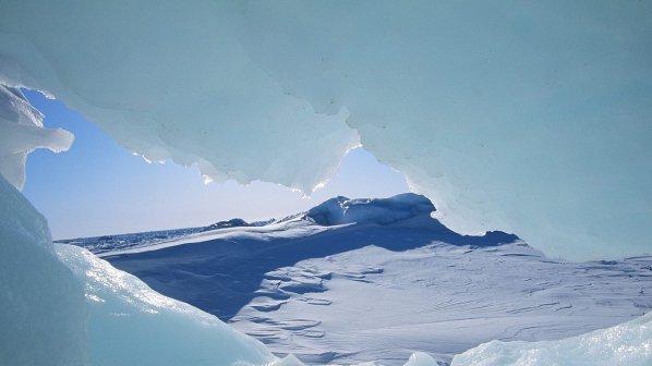 Глобалното затопляне води тропически микроорганизми в Арктика