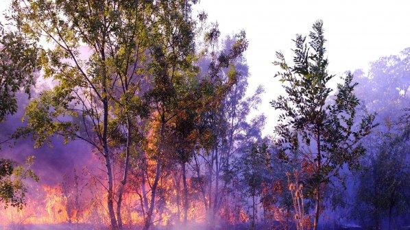 1000 декара сухи треви са изгорели за два дни в Ловешко