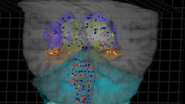 Учени създадоха атлас на мозъка