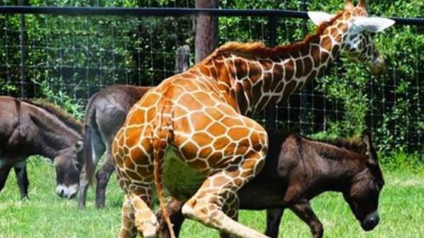Учат децата да уважават гейовете с приказки за жирафи педерасти