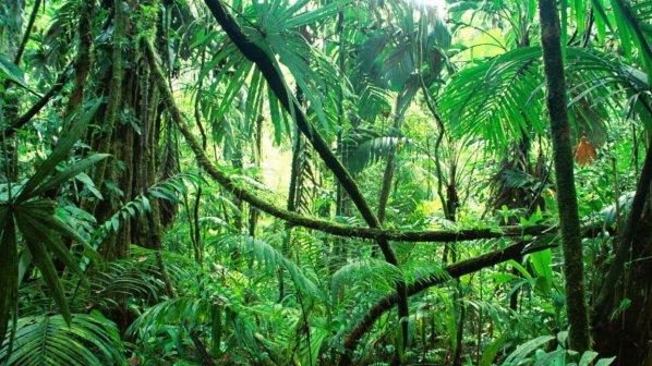 Изсичането на горите в Амазония е намаляло рекордно