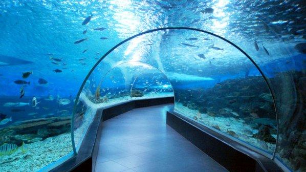Бургас ще си има истинска тропическа гора и океанариум
