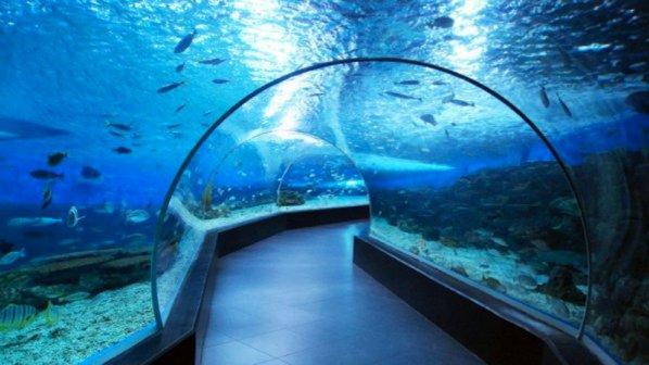 Руснаци наливат 100 млн. лв. в океанариума в Бургас