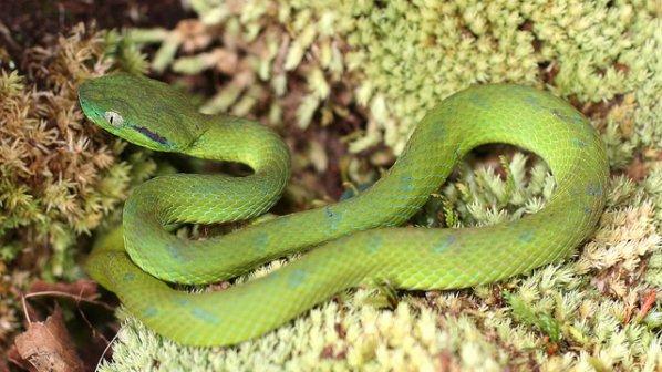 Учени откриха нов вид змия