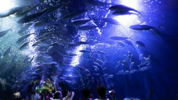 Океанариумът в Бургас ще има 42 аквариума и един делфинариум