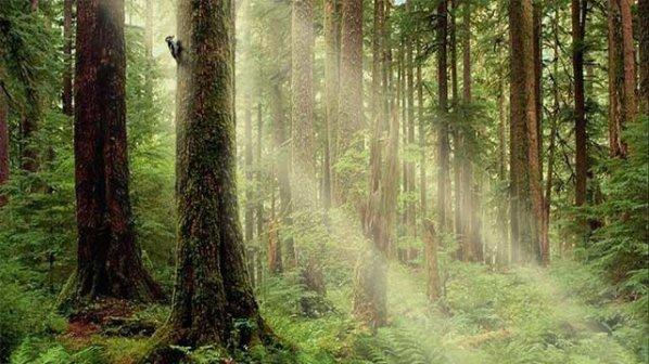 """Възможно е да има 25 процента неусвояване на средствата по """"Биоразнообразие"""""""
