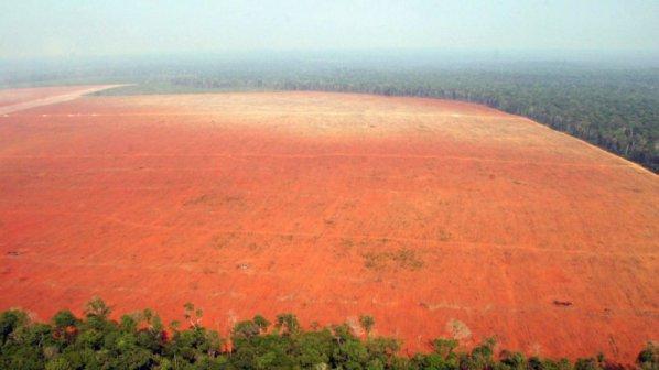 Обезлесяването на Амазония се увеличило