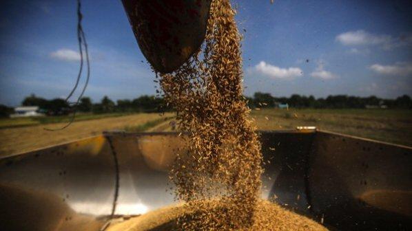 Обратното начиславане на ДДС на зърнопроизводителите се отлага за 2014 г.