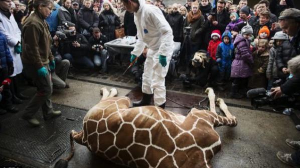 """Руски дипломат нарече Дания """"страна-убийца на жирафи"""""""