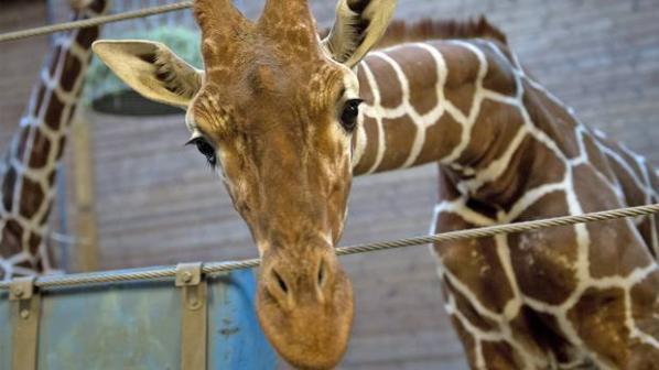 Зоопарковете в Европа убиват 5000 здрави животни годишно