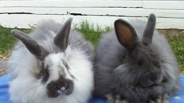 Длъжница плаща ток със зайци