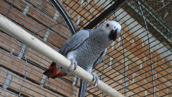 Наказаха РИОСВ-Шумен заради продажба на защитени папагали