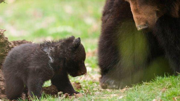За назидание убиха здраво мече в швейцарски зоопарк