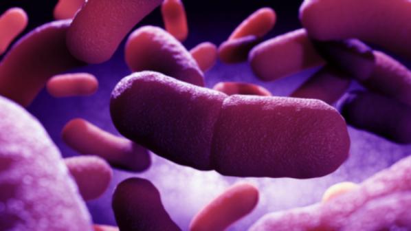 Смърт от бубонна чума постави под карантина десетки китайци