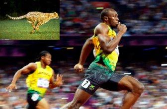 Болт иска да се състезава с гепард