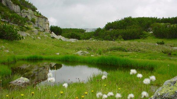 България е третата най-богата страна в Европа по биоразнообразие на горите си