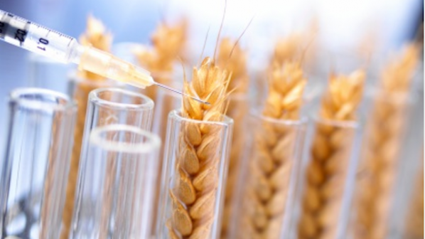 ЕП гласува за правото на отказ от ГМО