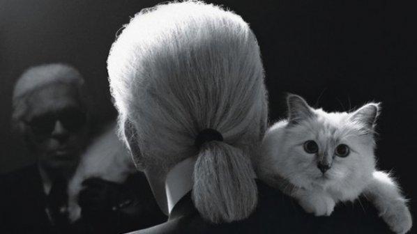 Котката на моден дизайнер спечелила 3 млн. евро през миналата година
