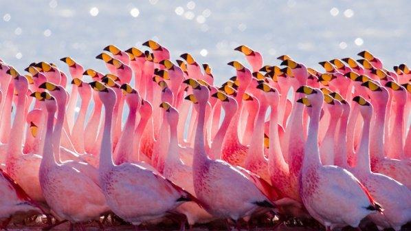 Черно фламинго се появи в Кипър (снимка)