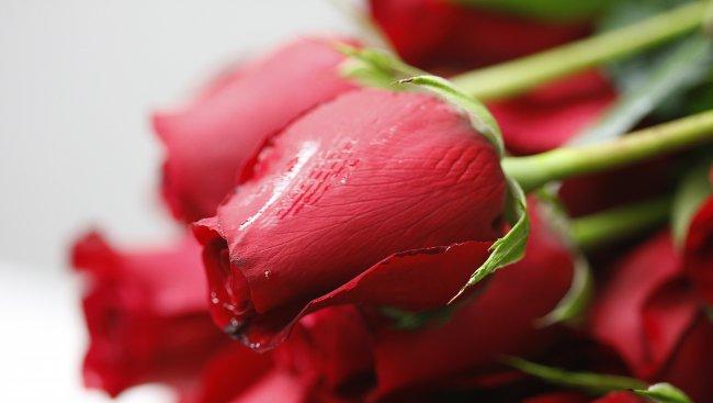 Пращат български рози за парада в Москва