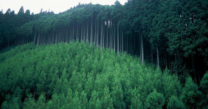 Дрон сади дървета