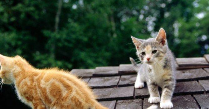 7 любопитни факта за покривите
