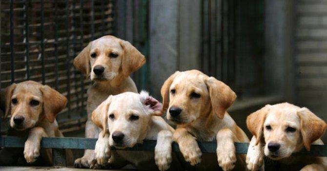 Екоравновесие: Не изхвърляйте на улицата малки кученца (видео)
