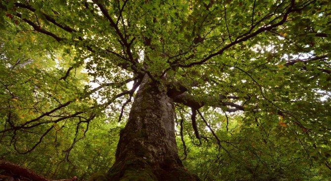 WWF проучиха запазена вековна гора в близост до София (снимки)