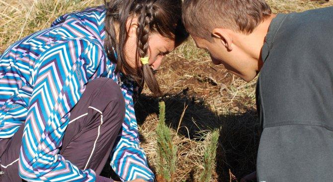 Доброволци садят фиданки в Кресна