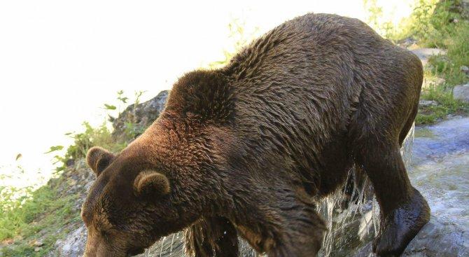 В зоопарка в Добрич мечката Берна заспа зимен сън, приятелят й Костадин все още будува