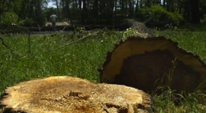Дърво падна върху къща в Плевен