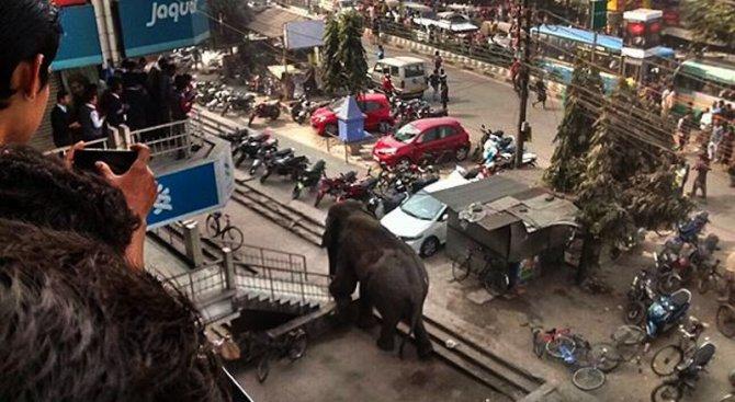 Побеснял слон унищожи над 100 къщи в Индия (видео)