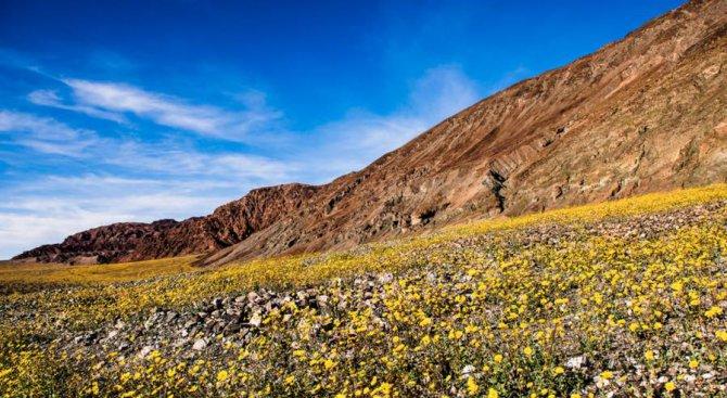 Долината на смъртта разцъфтя