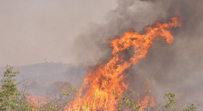 Запалиха защитени гори край Тутракан