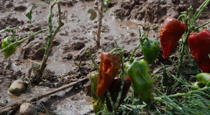 431 заявления за компенсиране на провалена реколта получи ДФЗ