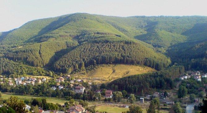 Изсичат вековна гора край Своге
