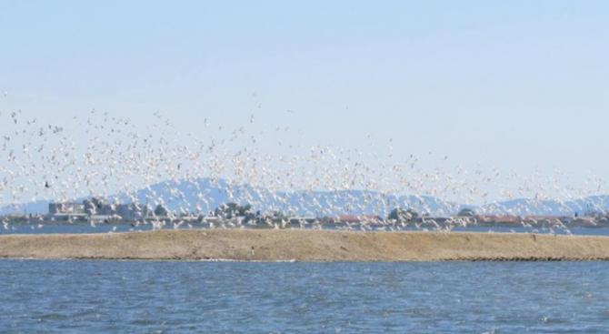 Пуснаха 4500 рибки в езерото Липник