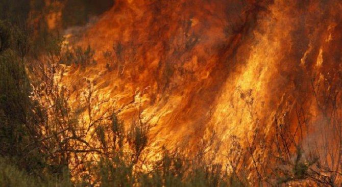 Забраниха изгарянето на отпадъци и сухи треви в Шумен