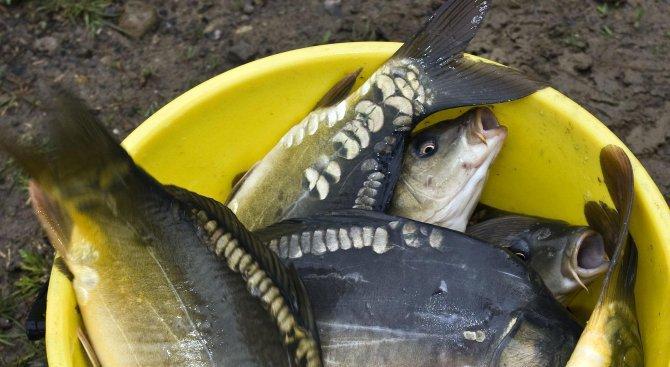 Изтичане на тор умъртви риба в река Умишка